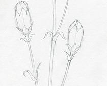 Страница 2 Поэтапное рисование предметов, растений, животных, позволяет каждому научиться рисовать