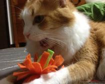Игрушка для котят своими руками