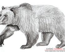 Поэтапный рисунок медведя в реалистичном стиле