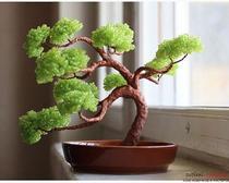 Дерево бонсай из бисера своими руками. Мастер класс с подробным описанием и фото