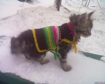Вязаная одежда для котенка