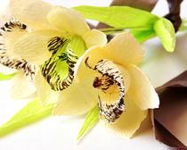 Цветы из бумаги: орхидеи своими руками