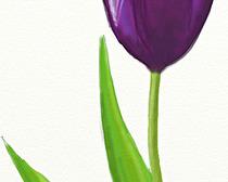 Поэтапное рисование тюльпана карандашом
