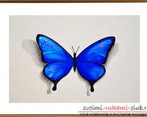 Мастер-класс по рисованию бабочки пастелью своими руками