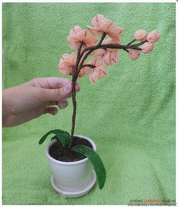 Как сплести орхидею из бисера, подробный и пошаговый мастер класс французской осевой техники плетения цветов из бисера с большим количеством фото и описанием работы. Фото №11