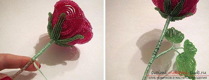 Как сплести розу из бисера. пошаговые фото и подробное описание плетения цветка и листьев розы в различных техниках. Фото №9