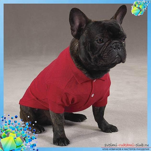 фото выкройки оригинальной рубашки для Вашей собаки. Фото №3