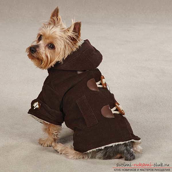 Тёплая одежда для йорков своими руками. Фото №7
