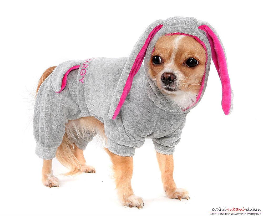 Одяг для собак своими руками