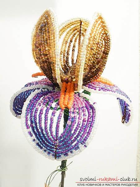 Как сплести разноцветный ирис из бисера во французской технике, описание и пошаговые фото. Фото №4