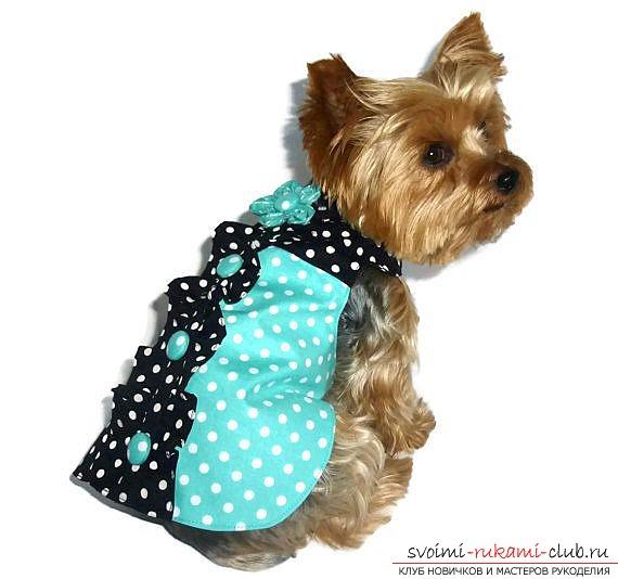 Стильное платье связать для собаки одежду