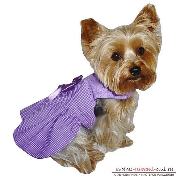 Одежда для собак платья