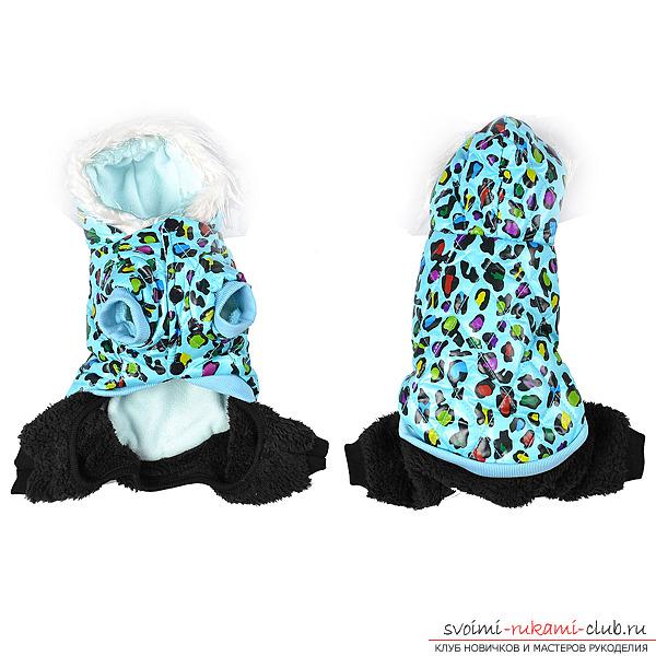 Новые фото выкройки комбинезона для собак 2014 - отличная идея для зимы 19 фотографий