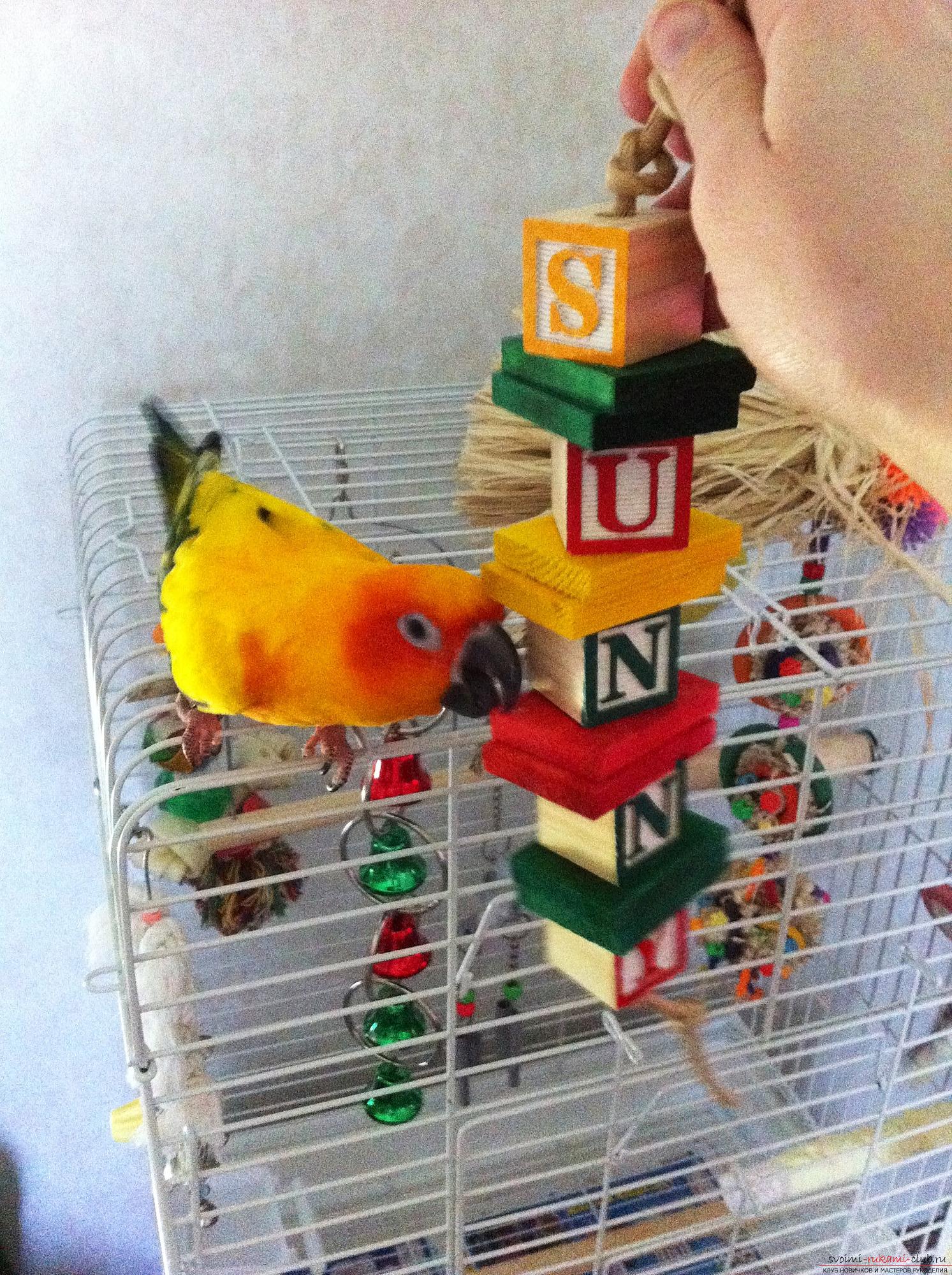 Игрушки волнистому попугаю своими руками 68