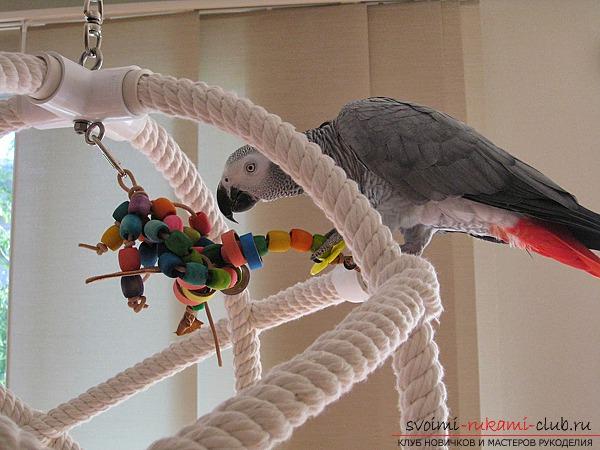 Насест для попугая своими руками 73