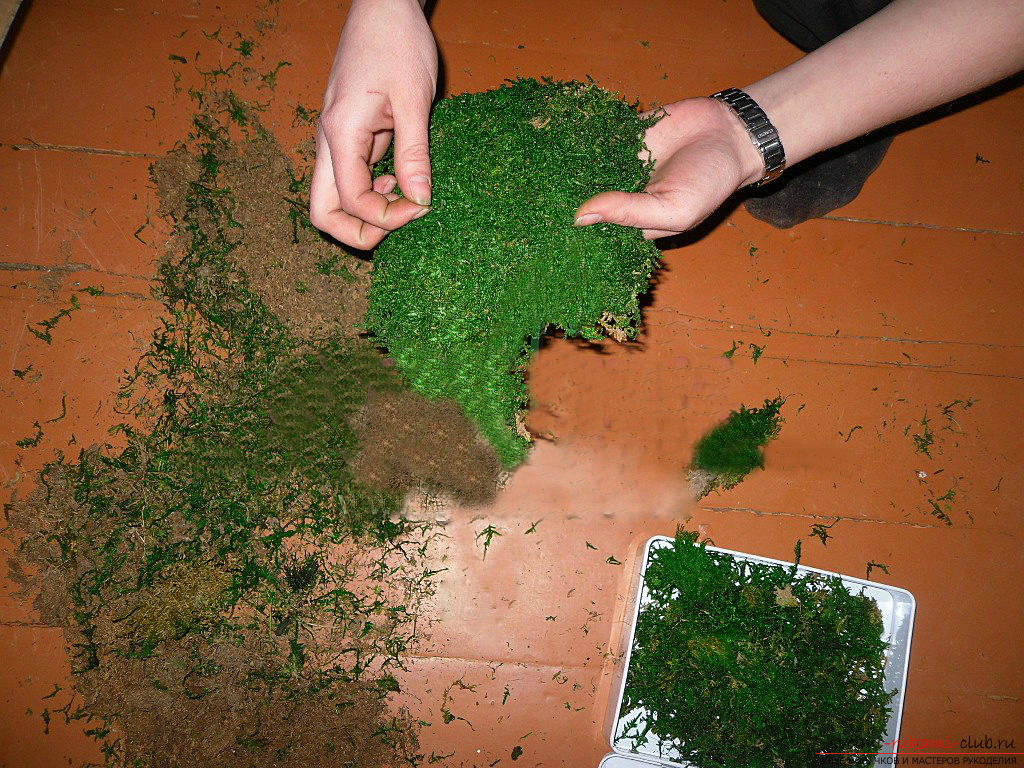 Как сделать стабилизированный мох своими руками мастер класс