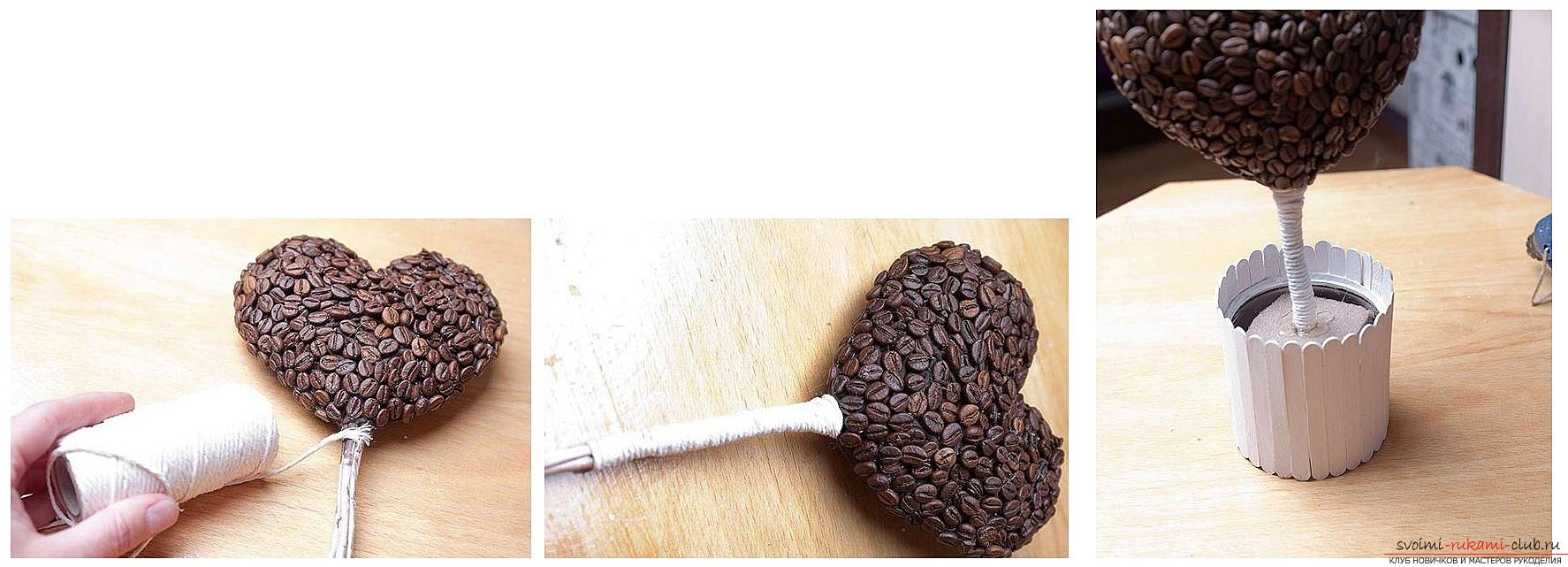 Как сделать топиарий из кофейных зерен своими руками, пошаговые фото, подробная инструкция, советы и рекомендации по созданию кофейных деревьев различной формы. Фото №12