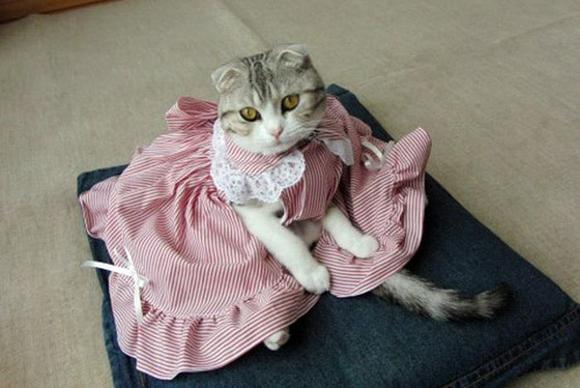 Одежда для кошек, изготовленная своими руками