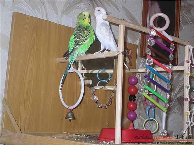 Игрушки для попугаев, изготовленные своими руками.</p> </div> <p> Фотографии игрушек и идеи для них.. Фото №1″ width=»600″/> </p> <p>Попугаи, как и другие птицы, не могут постоянно томиться в клетке, поэтому необходимо продумать для них место, которое будет им интересно, когда вы будете выпускать их на свободу.</p> <p> Для этих целей может подойти крепкая ветка. Сам ствол и множество ответвлений, на которые вы сможете прикрепить предметы и игрушки, которые заинтересуют вашего пернатого питомца, необходимо качественно прикрепить к деревянной устойчивой основе так, чтобы конструкция имела равновесие и не падала, когда попугай будет располагаться на ней.</p> <p> Можно сконструировать из деревянных планок, подобие клетки, только с не огражденным пространством для свободного перемещения птицы.</p> <p> Если такое <strong>специальное место</strong> не будет оборудовано, то попугай сам себе его придумает, и скорее всего это будет карниз в вашей комнате, а также шторы, по которым он будет карабкаться.</p> <p> Может ему приглянуться и люстра, на ней также можно расположиться при случае.</p> <p><div style=