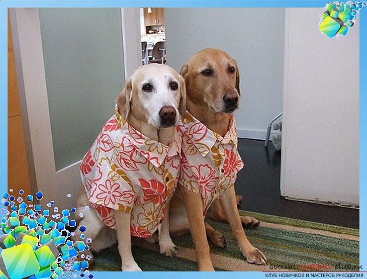 фото выкройки оригинальной рубашки для Вашей собаки. Фото №1
