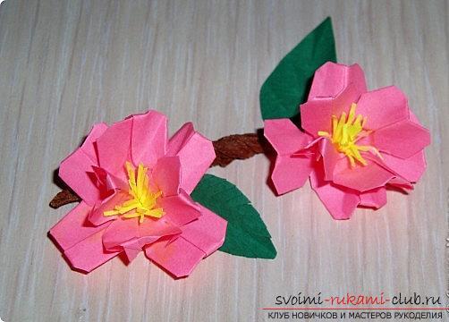 цветы картинки сакура