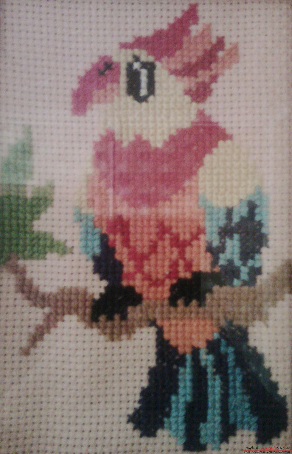 Схемы вышивки «попугаи» - Вышивка крестом 60