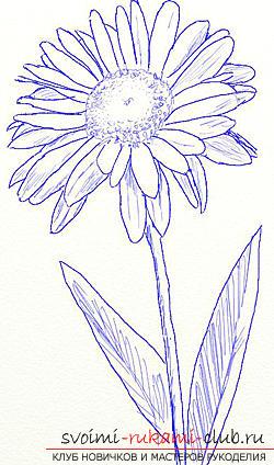 Правильно нарисовать на бумаге ромашку вы сможете, используя технику поэтапного рисования
