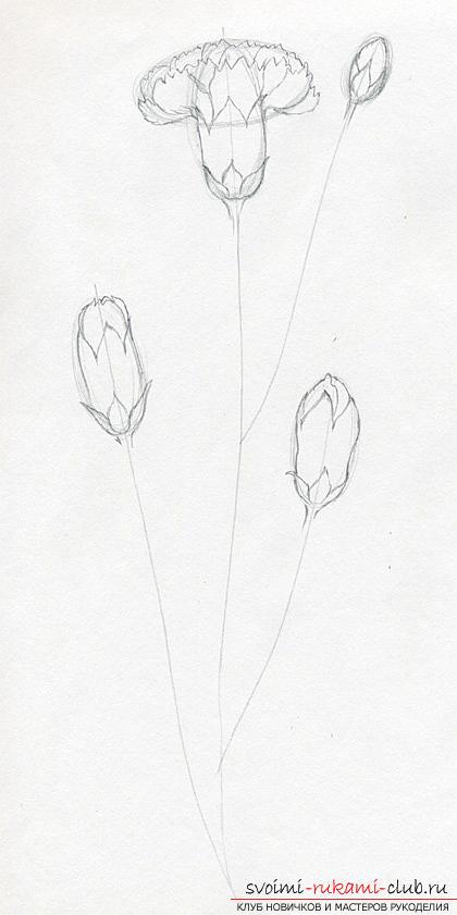 Поэтапное рисование гвоздики