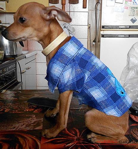 фото выкройки оригинальной рубашки для Вашей собаки. Фото №5