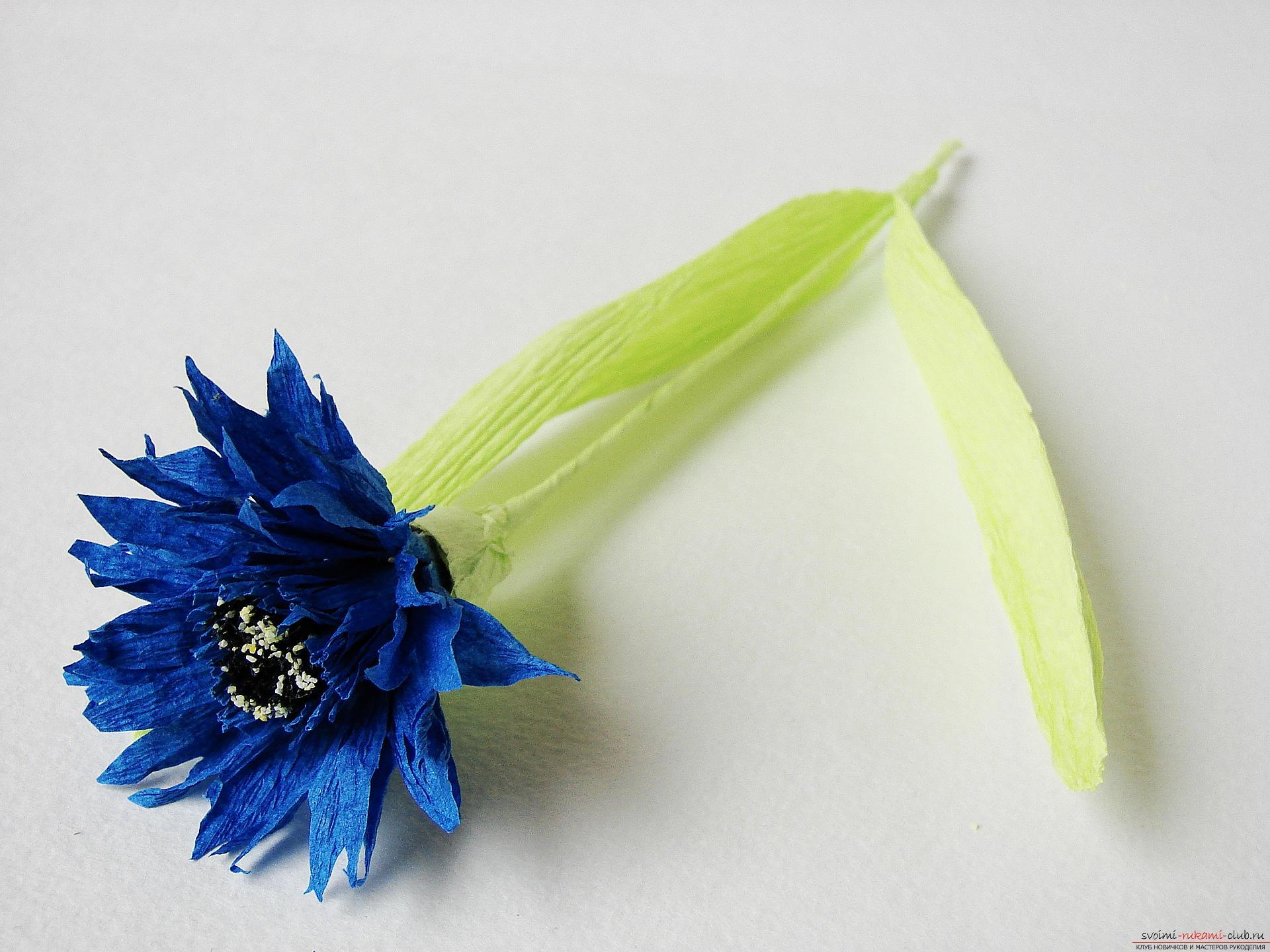 Смастерим васильки своими руками. Наш мастер-класс с фото подробно описывает как создать эти цветы из гофрированной бумаги.. Фото №29