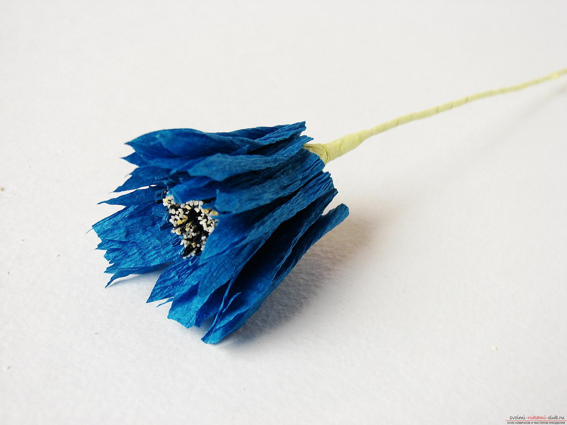 Смастерим васильки своими руками. Наш мастер-класс с фото подробно описывает как создать эти цветы из гофрированной бумаги.. Фото №23