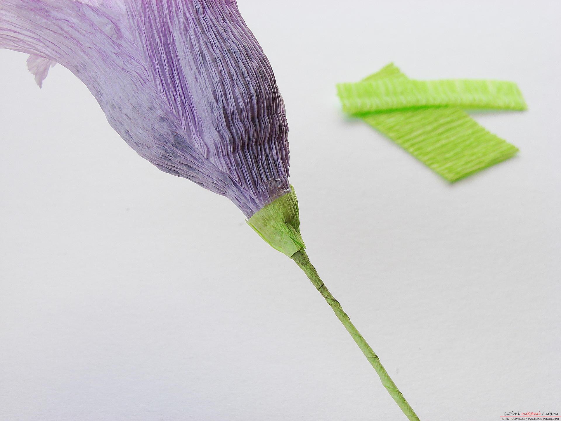 Мастер-класс научит как сделать гофрированные цветы своими руками – лилии из гофрированной бумаги.. Фото №32