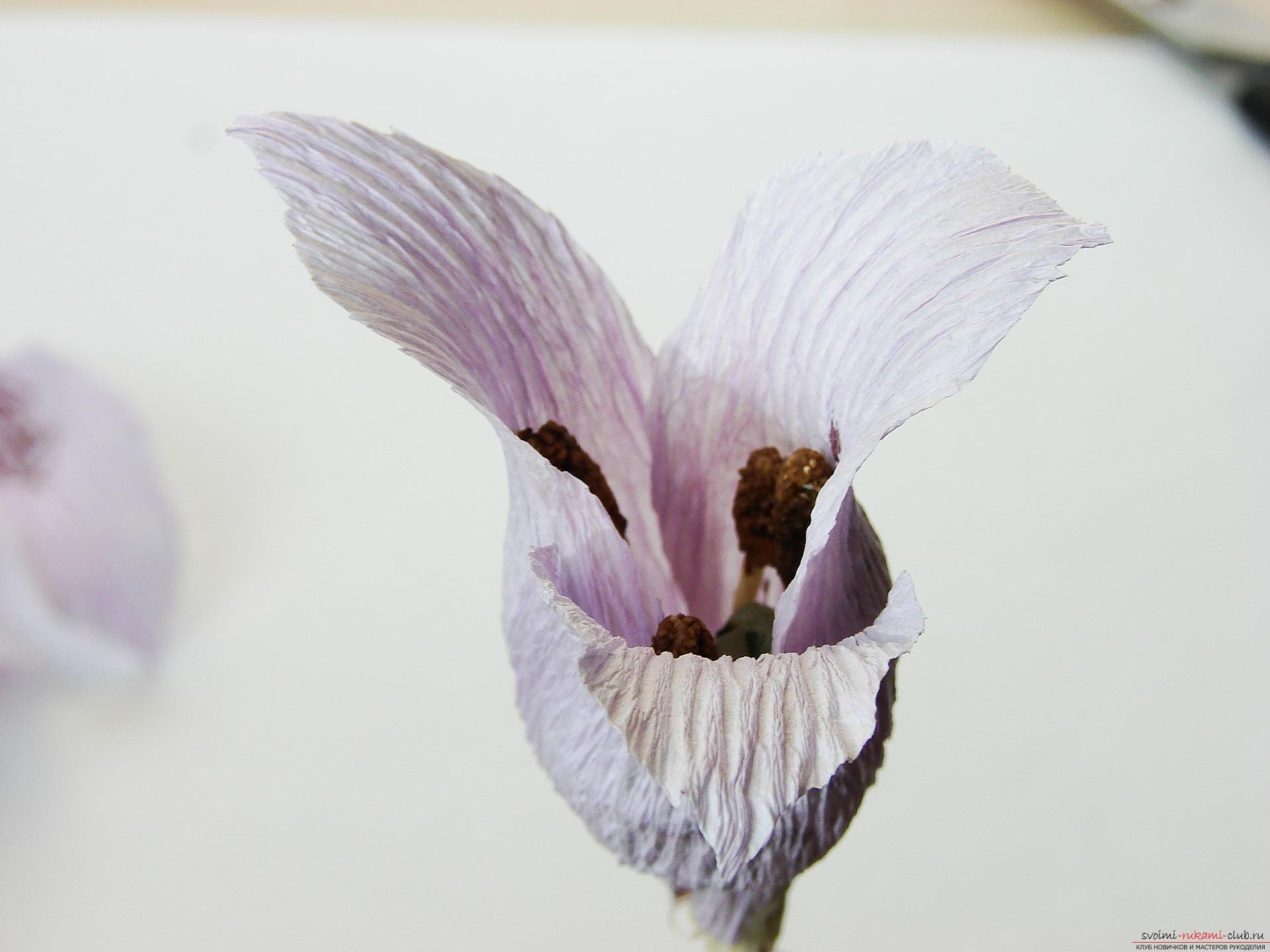 Мастер-класс научит как сделать гофрированные цветы своими руками – лилии из гофрированной бумаги.. Фото №30