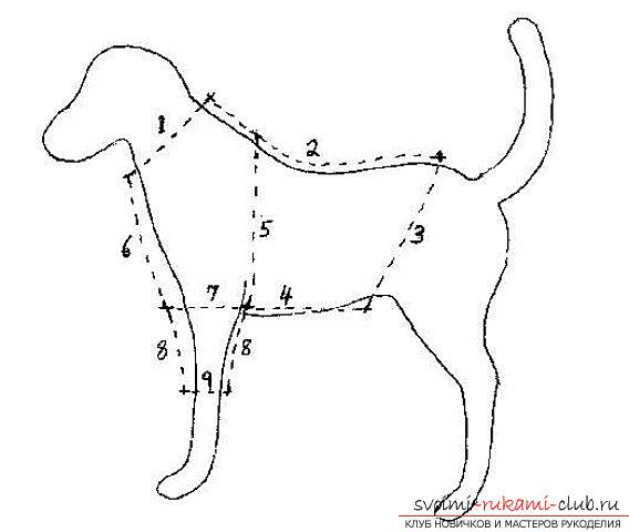 Одежда для собак своими руками выкройки китайская хохлатая