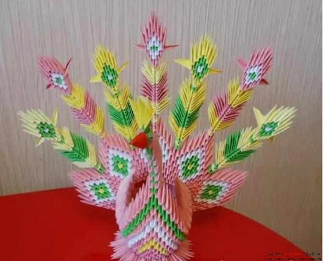 Модульное оригами павлин, мастер класс.