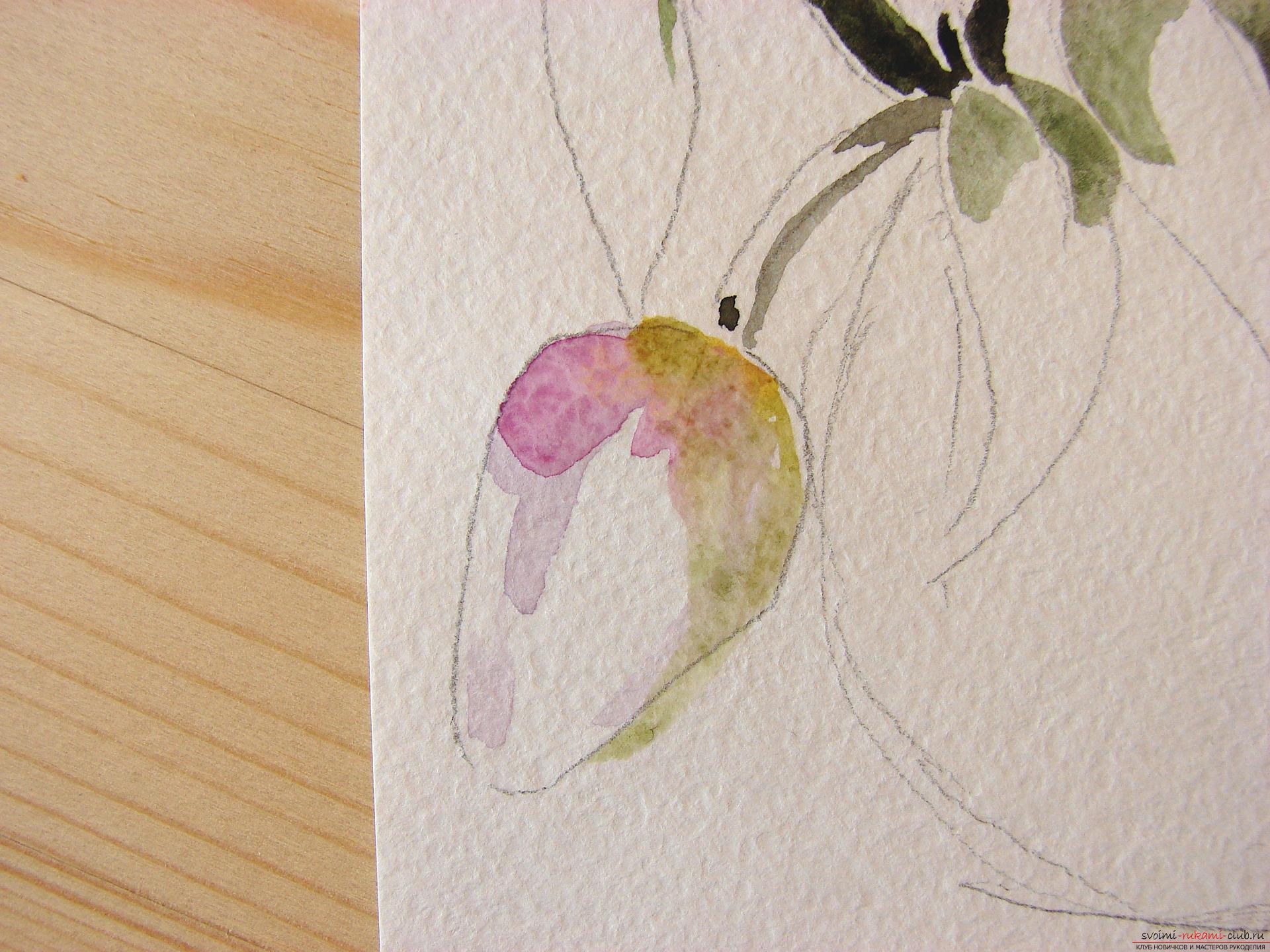 Мастер-класс по рисованию с фото научит как нарисовать цветы, подробно описав как рисуются тюльпаны поэтапно.. Фото №8