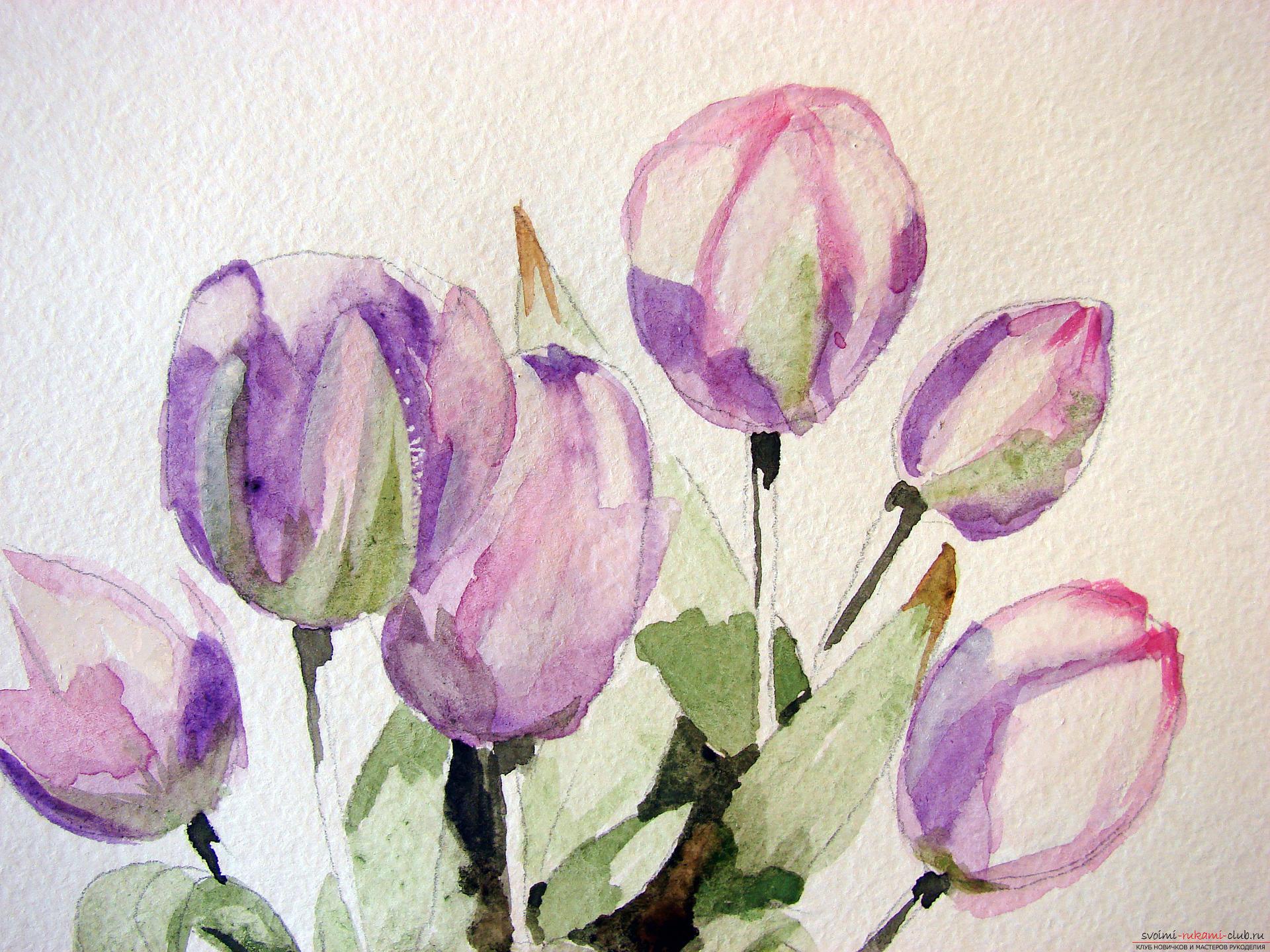 Мастер-класс по рисованию с фото научит как нарисовать цветы, подробно описав как рисуются тюльпаны поэтапно.. Фото №11