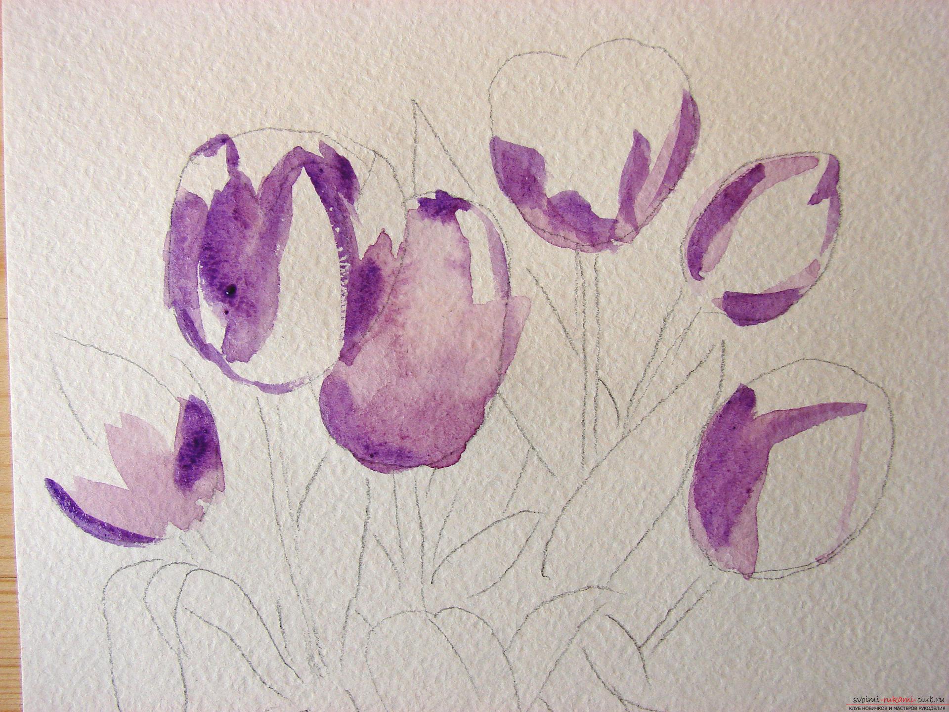 Мастер-класс по рисованию с фото научит как нарисовать цветы, подробно описав как рисуются тюльпаны поэтапно.. Фото №3