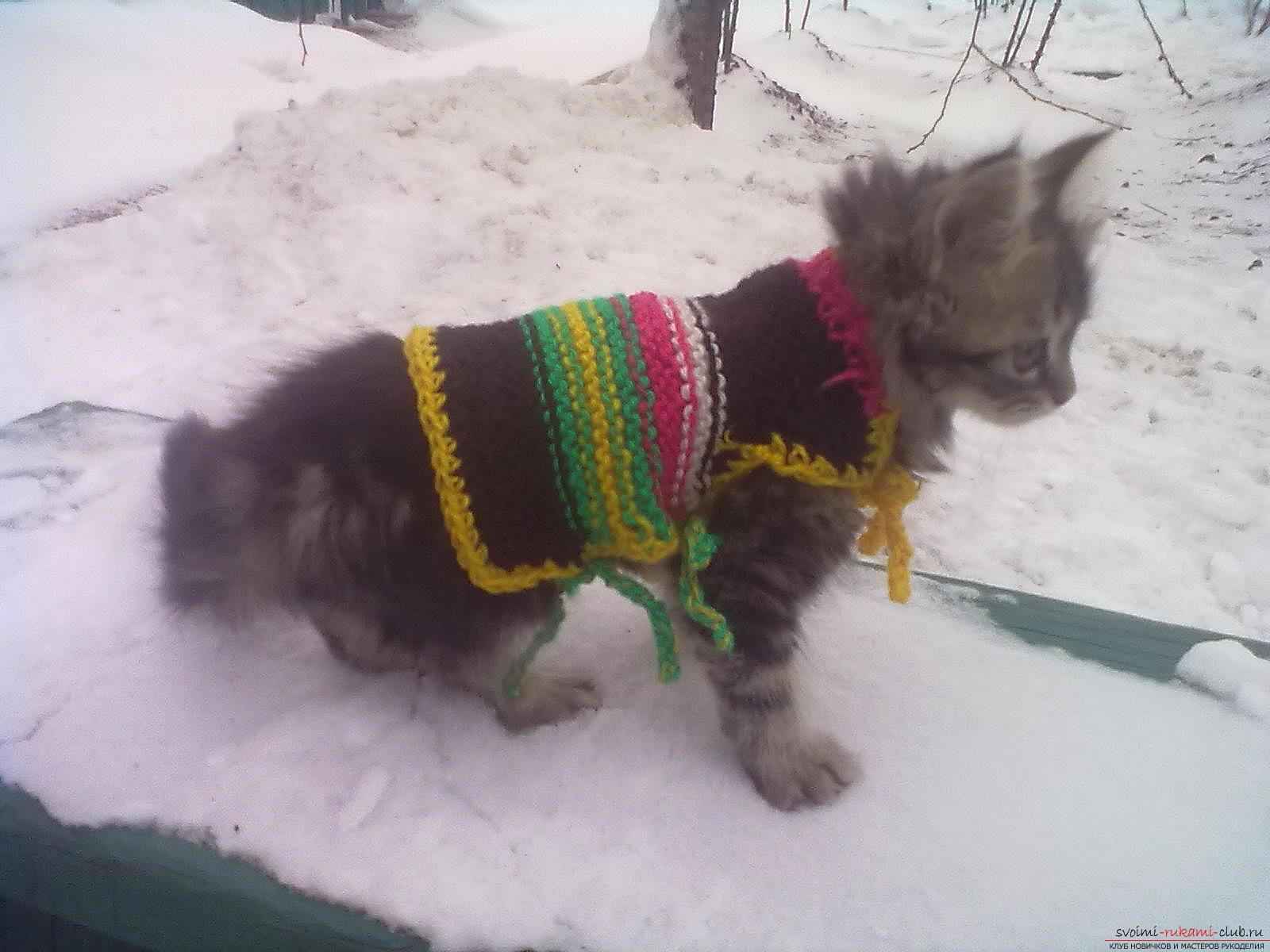 Вязаная одежда для собак и кошек создается своими руками, красивая кофточка наверняка согреет питомца в холодный времена.. Фото №1