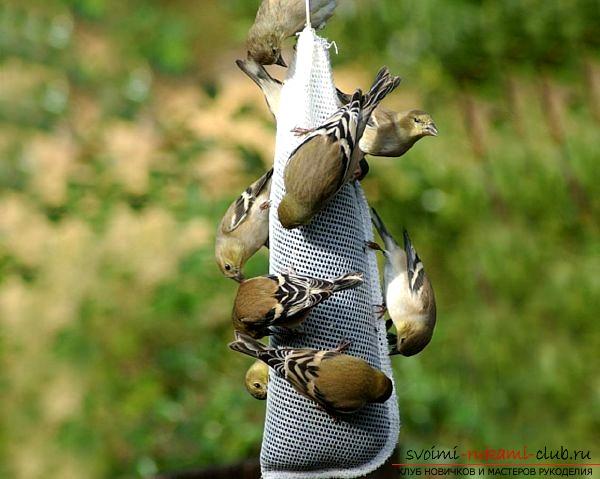 Как сделать кормушку для птичек собственными руками. Фото №1