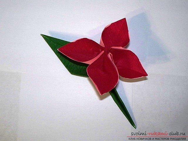 Самые легкие цветы
