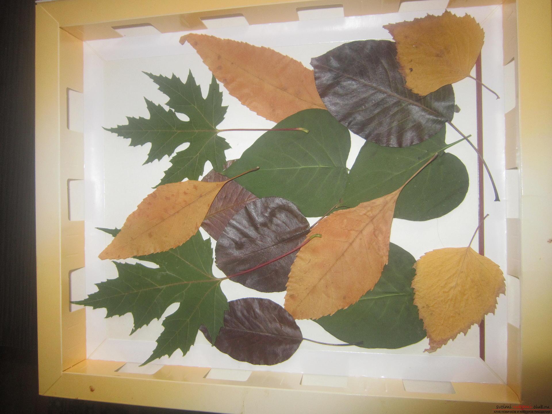 Ежик с листьями поделка 93