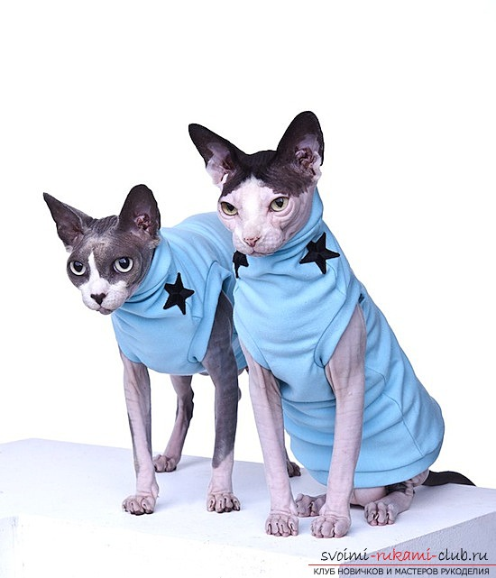 как сшить одежду для кошек