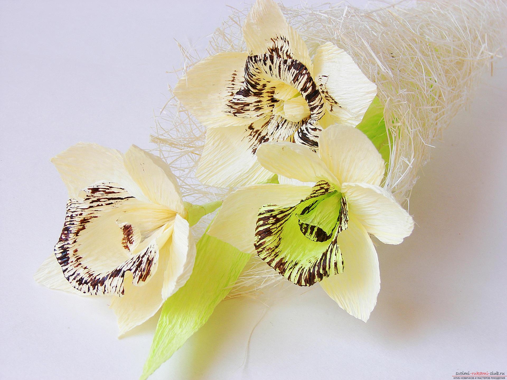 Как поливать орхидею. Виды полива 64