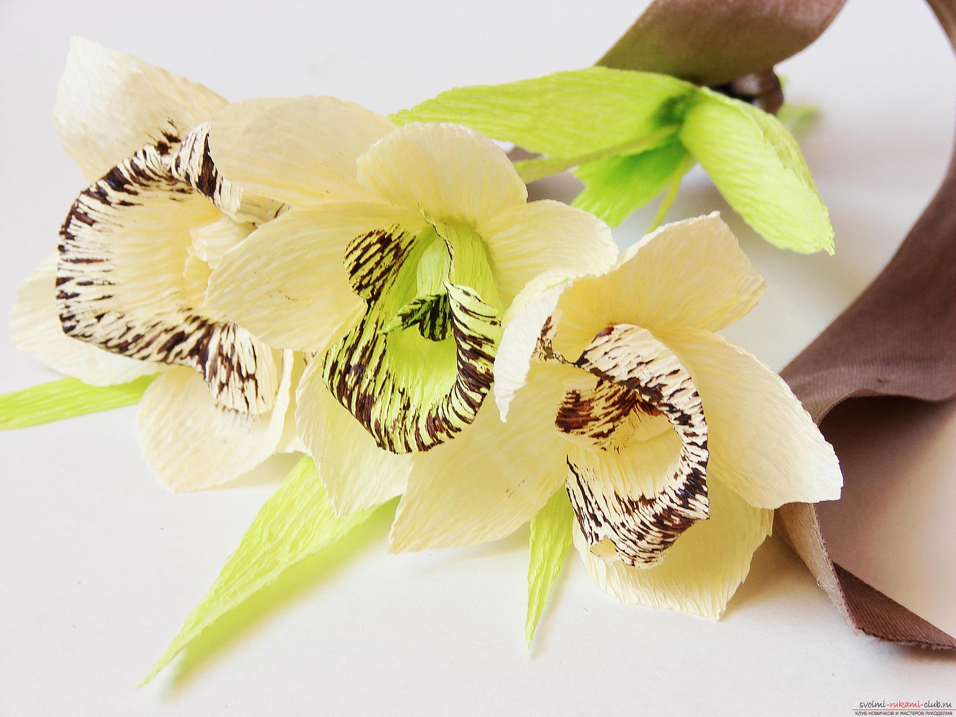 Топиарий из орхидей 33