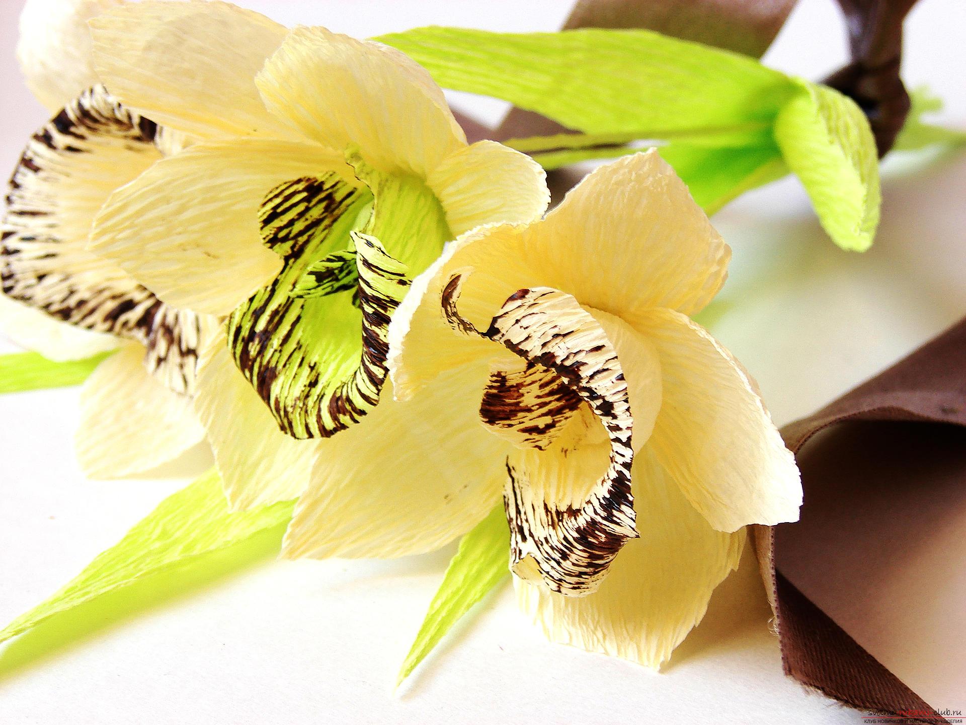 Орхидея из цветной бумаги своими руками фото и схемами