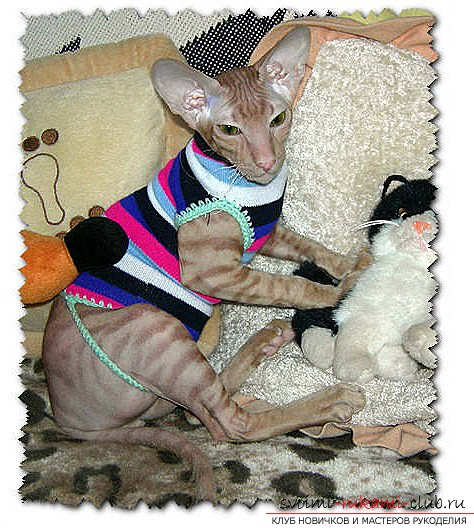 Как шить одежду для кошек