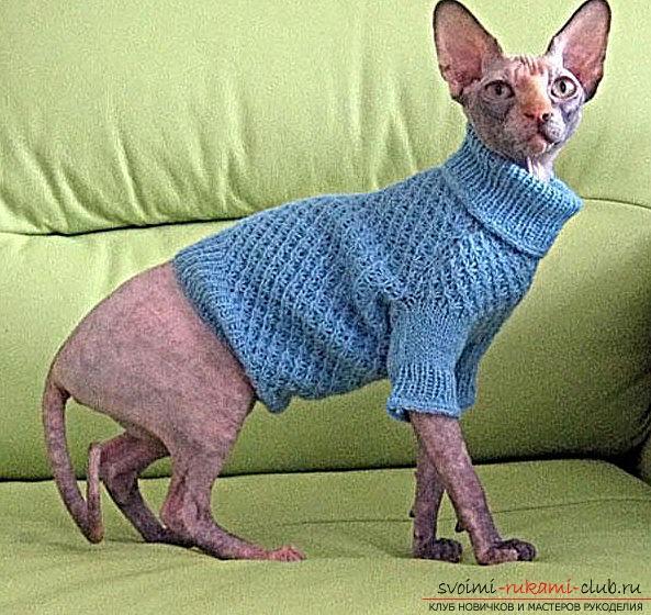 Свитер для кота и выкройка из старой одежды для новичка. Фото №1