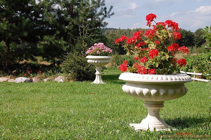 цветы для уличных вазонов рассмотрим Землю