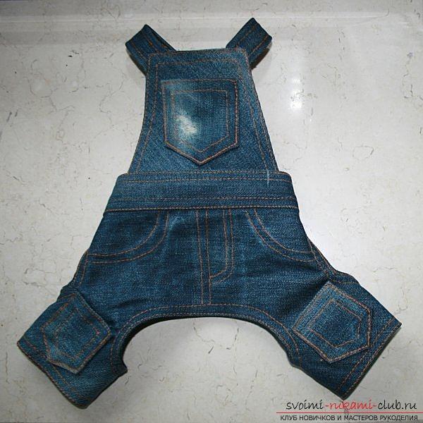 Как сшить одежду для маленьких собак. Фото №1